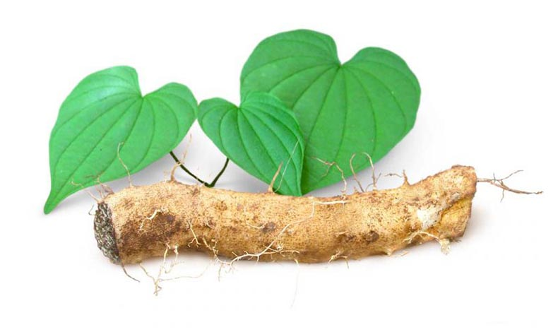Wild Yam Root: Scientific Health Benefits, Negative Effects And Dosage
